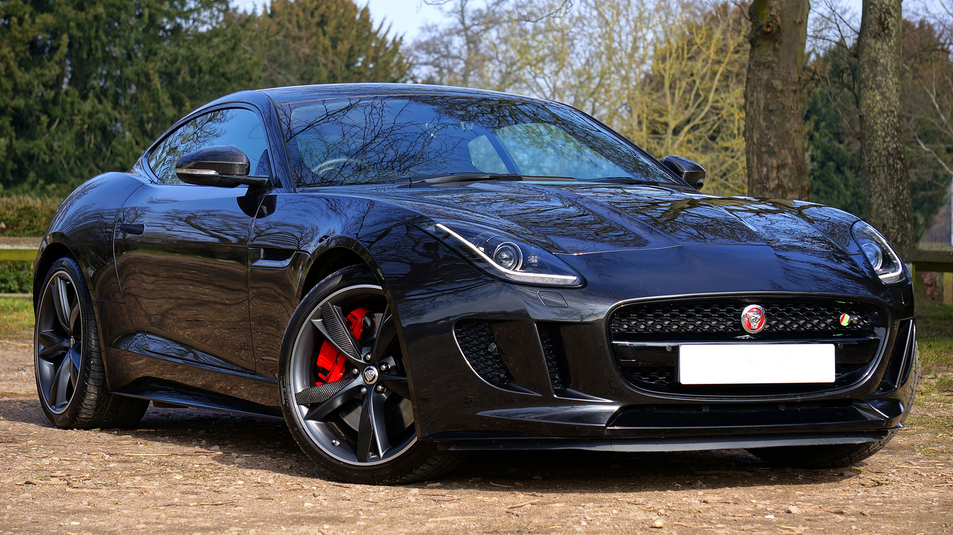 jaguar-1256572